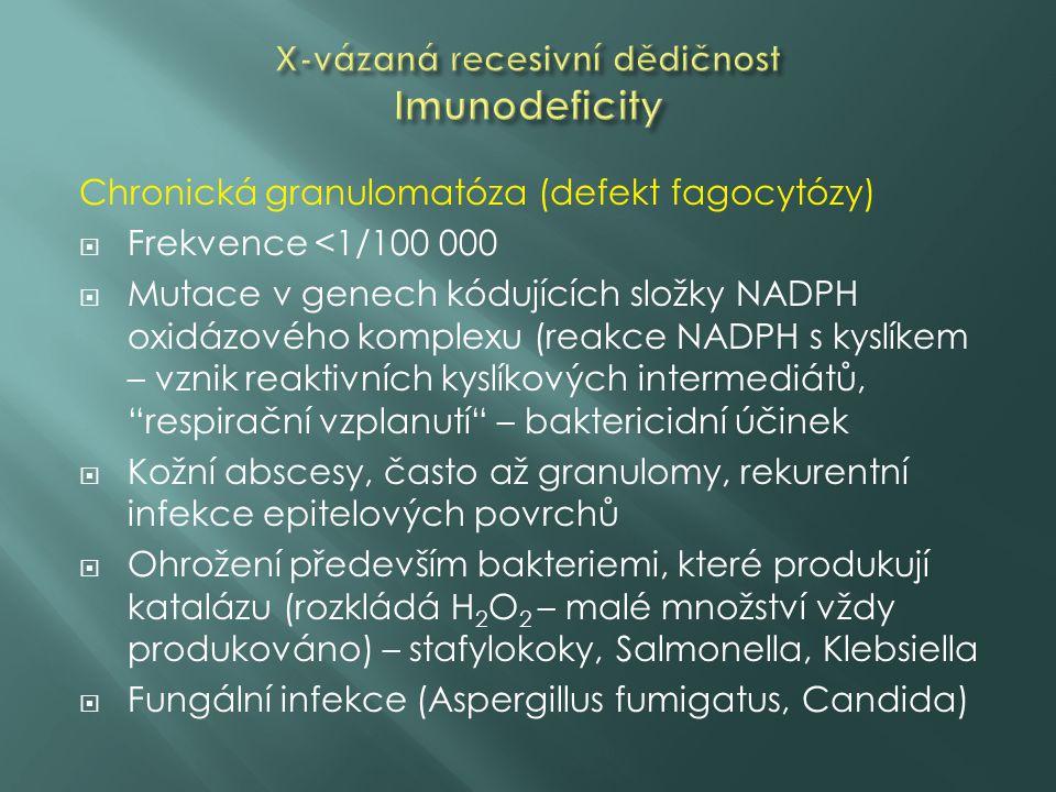 Chronická granulomatóza (defekt fagocytózy)  Frekvence <1/100 000  Mutace v genech kódujících složky NADPH oxidázového komplexu (reakce NADPH s kyslíkem – vznik reaktivních kyslíkových intermediátů, respirační vzplanutí – baktericidní účinek  Kožní abscesy, často až granulomy, rekurentní infekce epitelových povrchů  Ohrožení především bakteriemi, které produkují katalázu (rozkládá H 2 O 2 – malé množství vždy produkováno) – stafylokoky, Salmonella, Klebsiella  Fungální infekce (Aspergillus fumigatus, Candida)