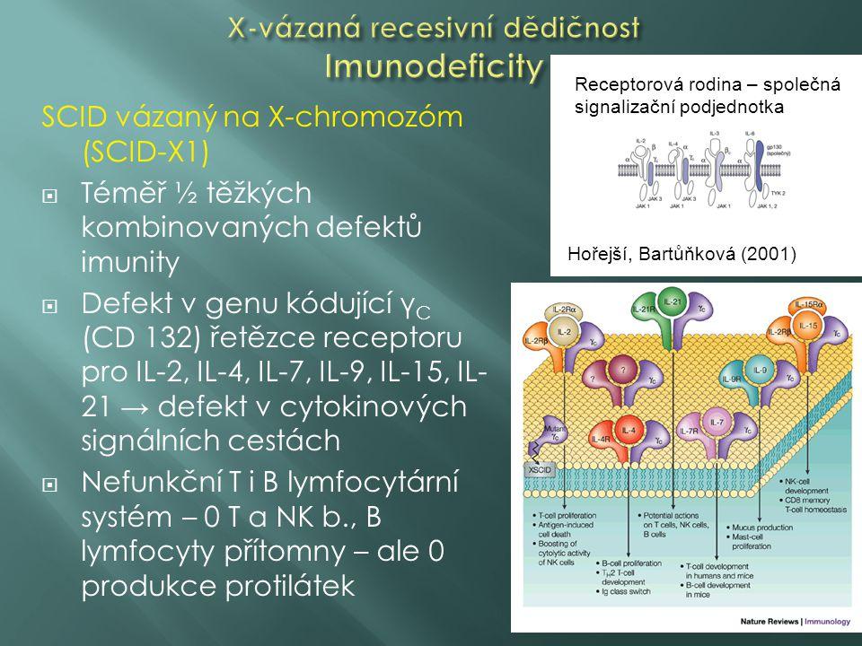 SCID vázaný na X-chromozóm (SCID-X1)  Téměř ½ těžkých kombinovaných defektů imunity  Defekt v genu kódující γ C (CD 132) řetězce receptoru pro IL-2, IL-4, IL-7, IL-9, IL-15, IL- 21 → defekt v cytokinových signálních cestách  Nefunkční T i B lymfocytární systém – 0 T a NK b., B lymfocyty přítomny – ale 0 produkce protilátek Receptorová rodina – společná signalizační podjednotka Hořejší, Bartůňková (2001)