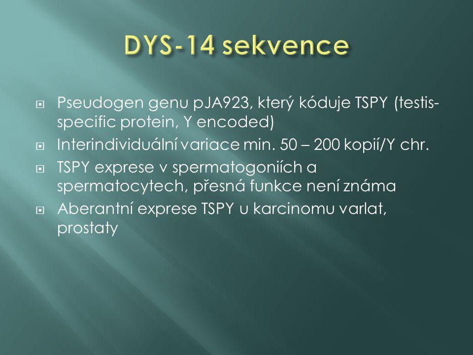  Pseudogen genu pJA923, který kóduje TSPY (testis- specific protein, Y encoded)  Interindividuální variace min. 50 – 200 kopií/Y chr.  TSPY exprese