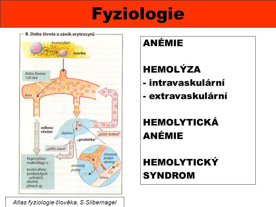 Fyziologie Atlas fyziologie člověka, S.Silbernagel ANÉMIE HEMOLÝZA - intravaskulární - extravaskulární HEMOLYTICKÁ ANÉMIE HEMOLYTICKÝ SYNDROM
