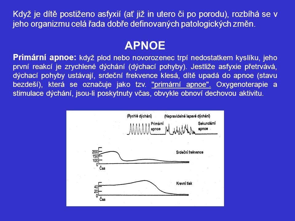Sekundární apnoe: Když asfyxie pokračuje, dítě reaguje hlubokým, Iapavým dýcháním (gaspingem), srdeční akce dále klesá a začíná klesat i krevní tlak.