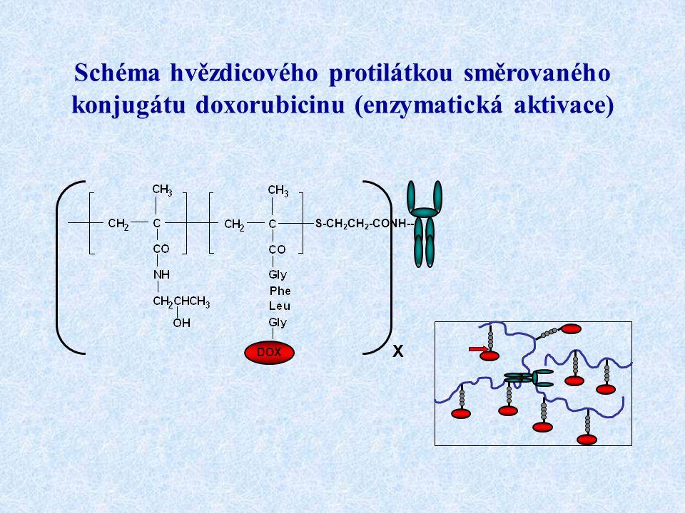 DOX S-CH 2 CH 2 -CONH-- Schéma hvězdicového protilátkou směrovaného konjugátu doxorubicinu (enzymatická aktivace) X
