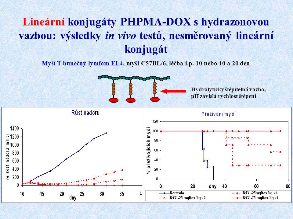 Lineární konjugáty PHPMA-DOX s hydrazonovou vazbou: výsledky in vivo testů, nesměrovaný lineární konjugát Myší T-buněčný lymfom EL4, myši C57BL/6, léč