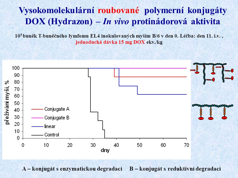 Vysokomolekulární roubované polymerní konjugáty DOX (Hydrazon) – In vivo protinádorová aktivita 10 5 buněk T-buněčného lymfomu EL4 inokulovaných myším