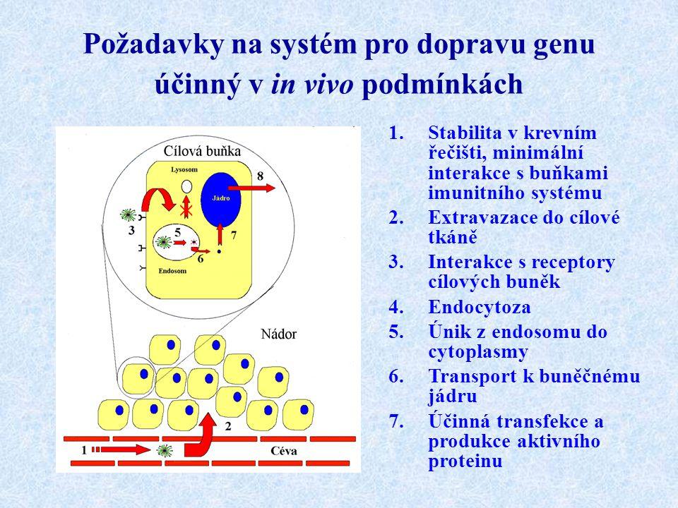 Požadavky na systém pro dopravu genu účinný v in vivo podmínkách 1.Stabilita v krevním řečišti, minimální interakce s buňkami imunitního systému 2.Ext