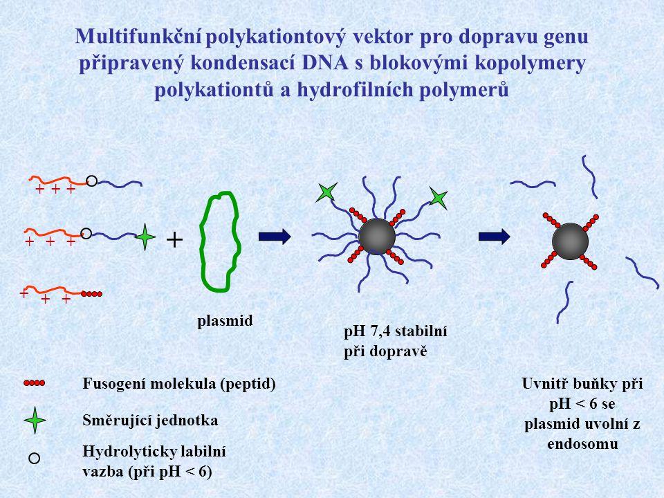 Multifunkční polykationtový vektor pro dopravu genu připravený kondensací DNA s blokovými kopolymery polykationtů a hydrofilních polymerů +++ +++ + ++
