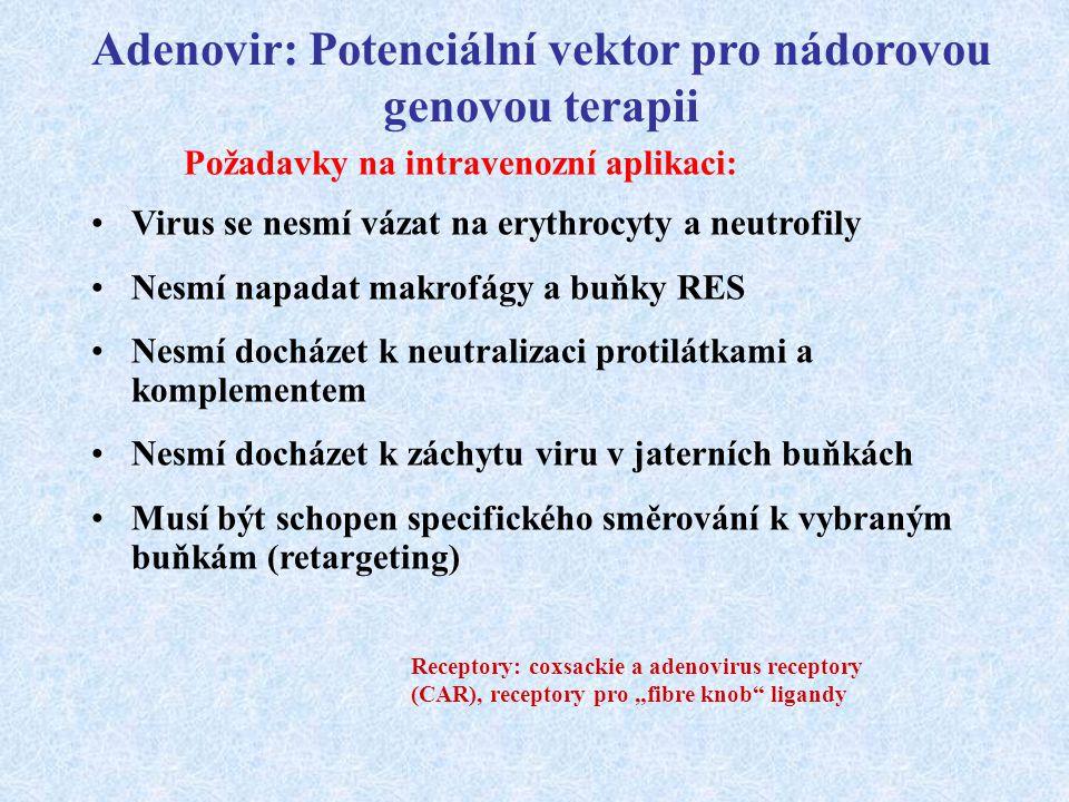 Požadavky na intravenozní aplikaci: Virus se nesmí vázat na erythrocyty a neutrofily Nesmí napadat makrofágy a buňky RES Nesmí docházet k neutralizaci