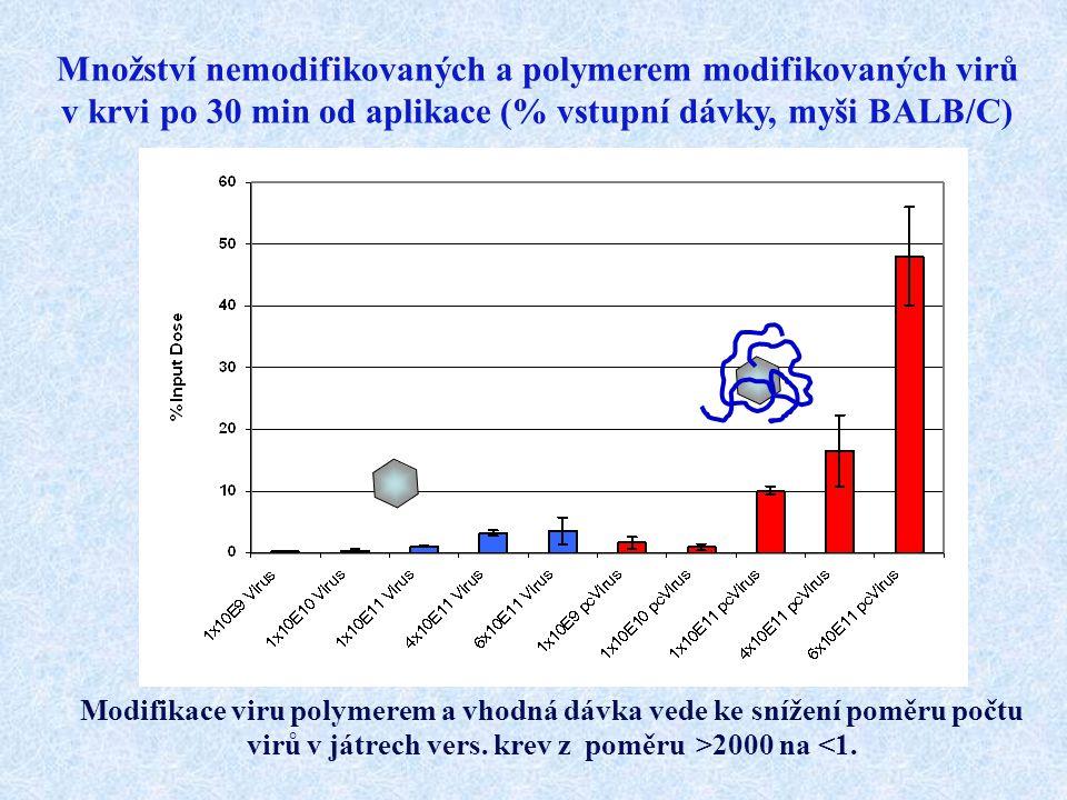 Množství nemodifikovaných a polymerem modifikovaných virů v krvi po 30 min od aplikace (% vstupní dávky, myši BALB/C) Modifikace viru polymerem a vhod