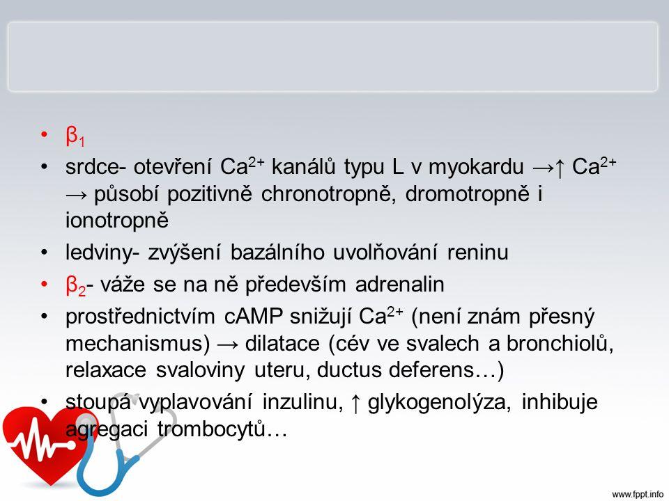 β 1 srdce- otevření Ca 2+ kanálů typu L v myokardu →↑ Ca 2+ → působí pozitivně chronotropně, dromotropně i ionotropně ledviny- zvýšení bazálního uvolň