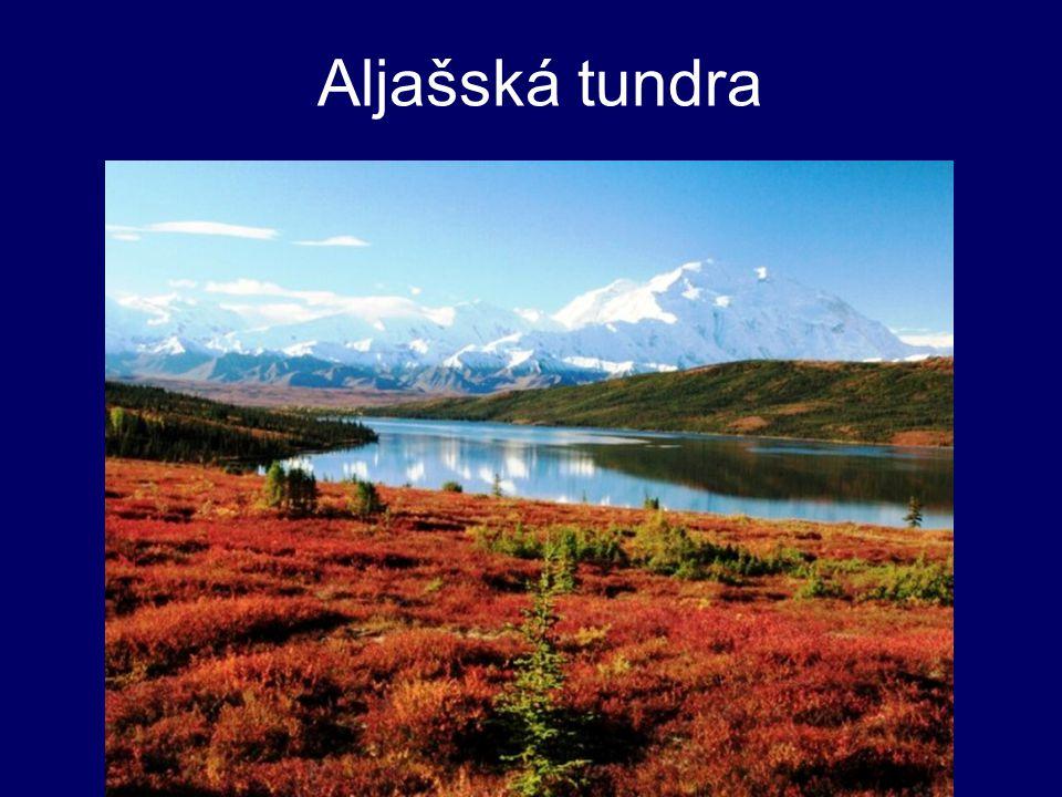 Aljašská tundra