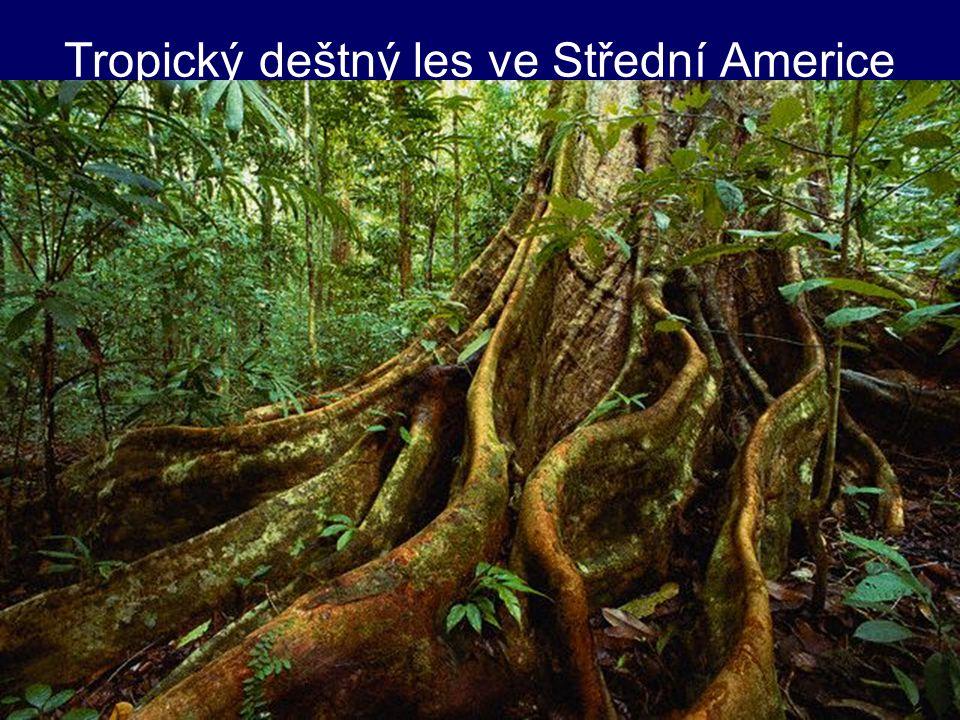 Tropický deštný les ve Střední Americe