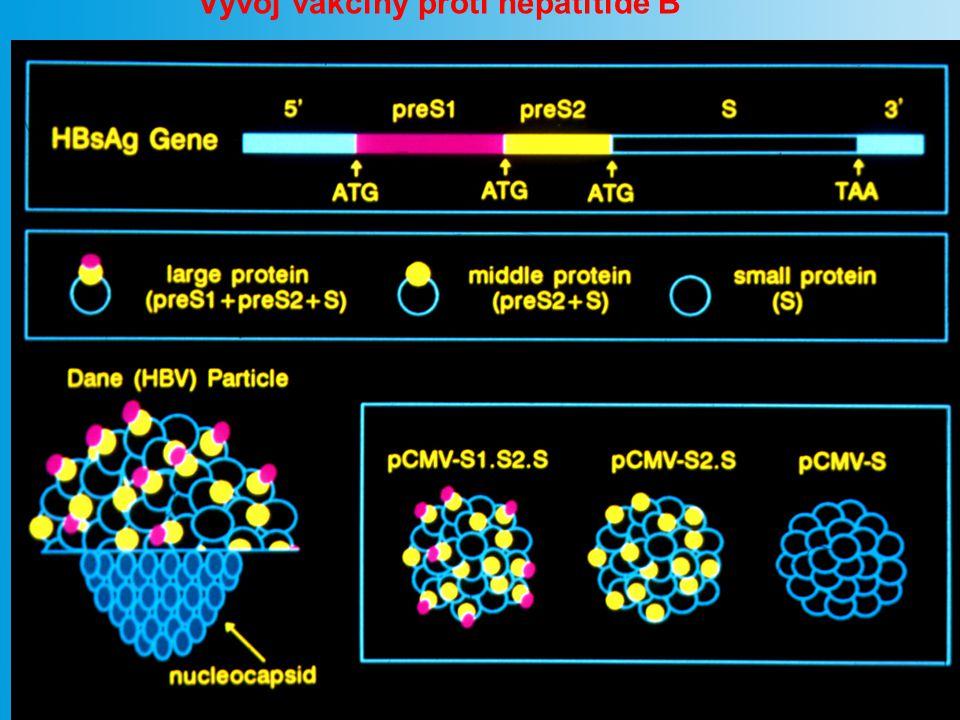 Vývoj vakcíny proti hepatitidě B
