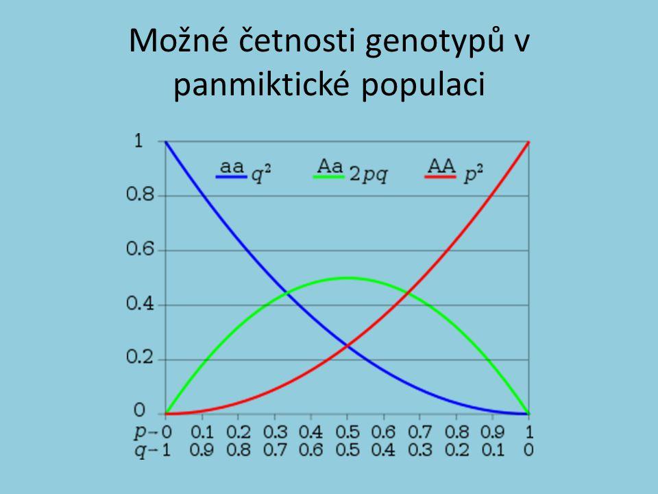 Možné četnosti genotypů v panmiktické populaci