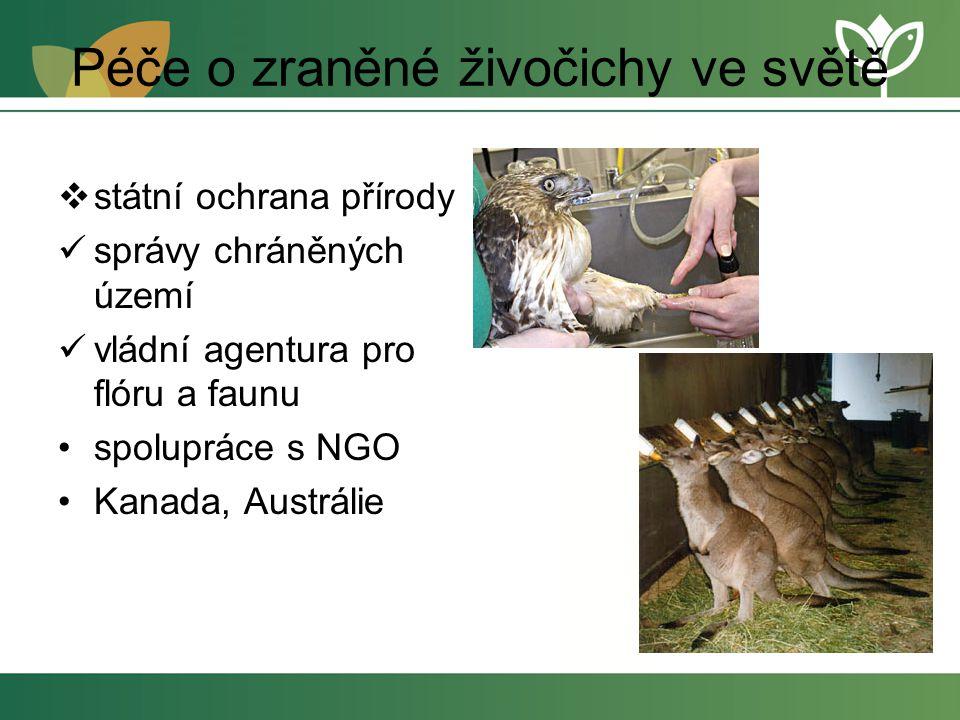 Péče o zraněné živočichy ve světě  státní ochrana přírody správy chráněných území vládní agentura pro flóru a faunu spolupráce s NGO Kanada, Austrálie
