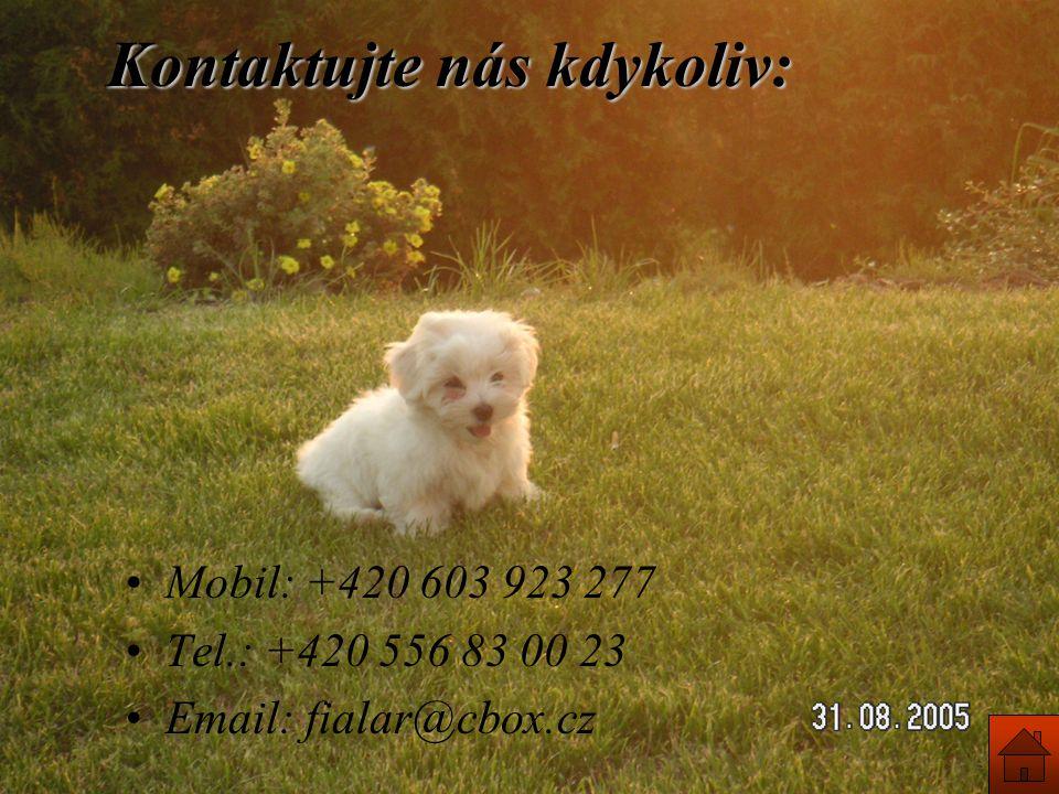 Kontaktujte nás kdykoliv: Mobil: +420 603 923 277 Tel.: +420 556 83 00 23 Email: fialar@cbox.cz