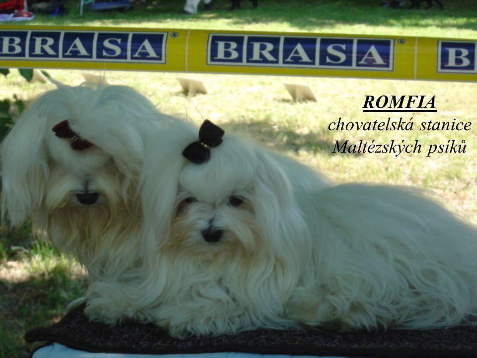 ROMFIA chovatelská stanice Maltézských psíků
