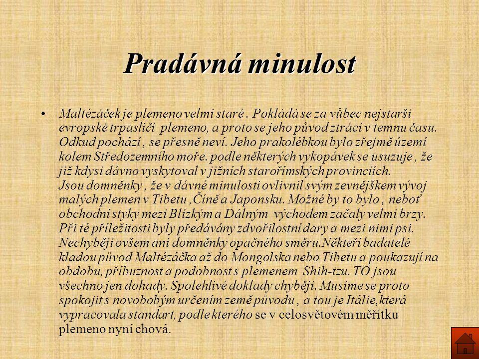 Pradávná minulost Maltézáček je plemeno velmi staré.