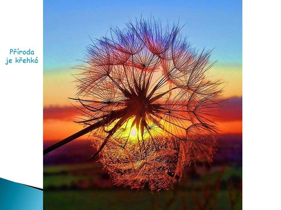 Příroda disponuje nádhernými barvami
