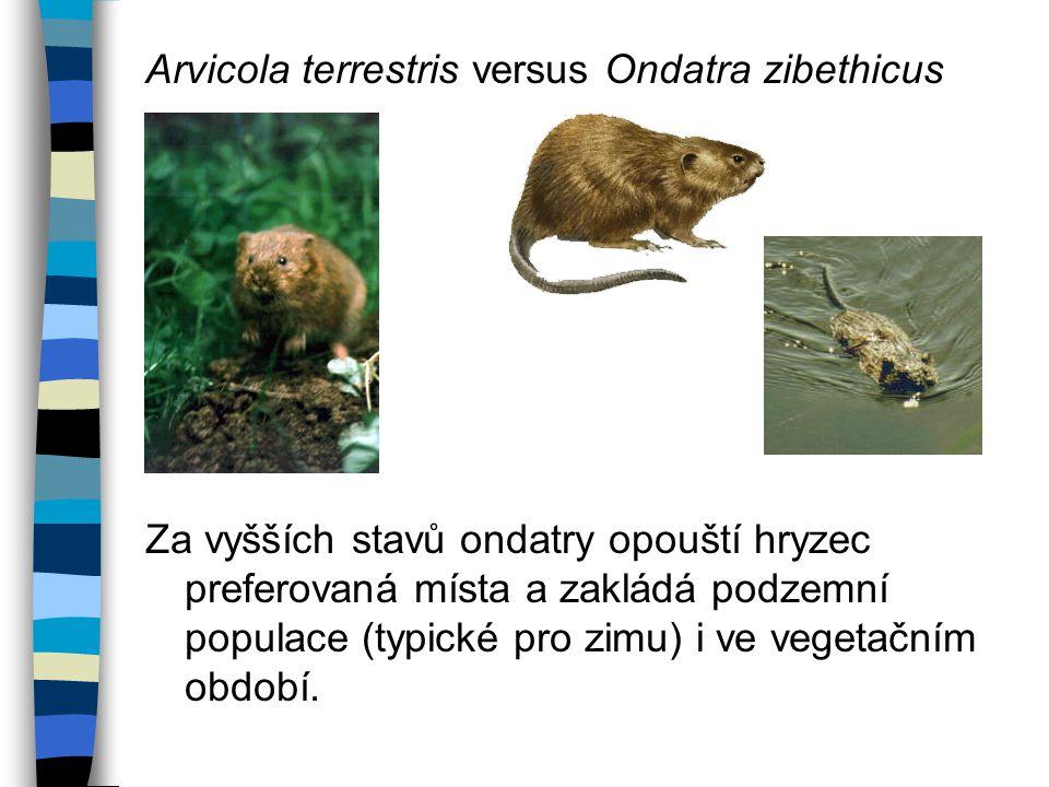 Arvicola terrestris versus Ondatra zibethicus Za vyšších stavů ondatry opouští hryzec preferovaná místa a zakládá podzemní populace (typické pro zimu) i ve vegetačním období.