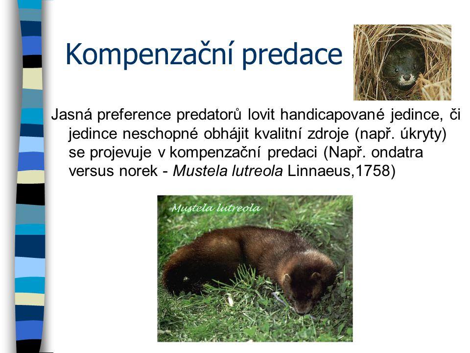 Kompenzační predace Jasná preference predatorů lovit handicapované jedince, či jedince neschopné obhájit kvalitní zdroje (např.