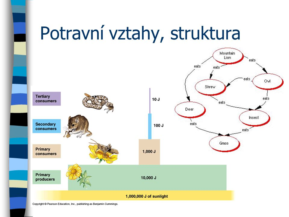 Potravní vztahy, struktura