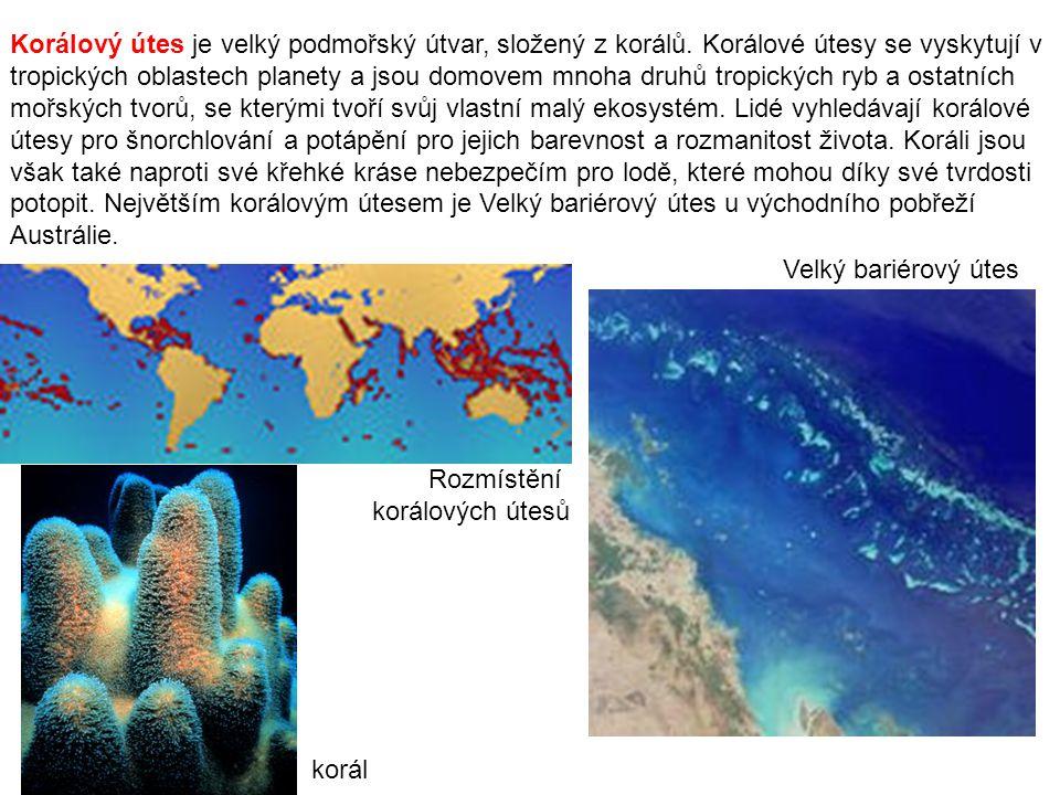 Korálový útes je velký podmořský útvar, složený z korálů. Korálové útesy se vyskytují v tropických oblastech planety a jsou domovem mnoha druhů tropic