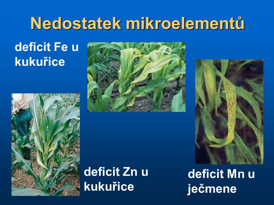 Nedostatek mikroelementů deficit Fe u kukuřice deficit Mn u ječmene deficit Zn u kukuřice