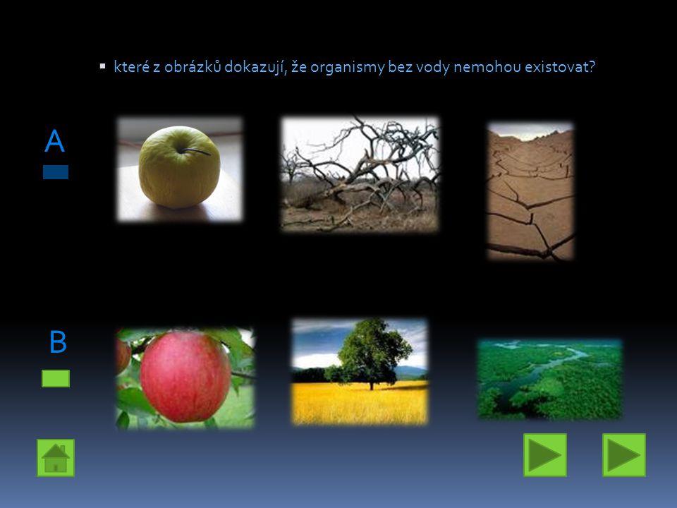  které z obrázků dokazují, že organismy bez vody nemohou existovat? A B