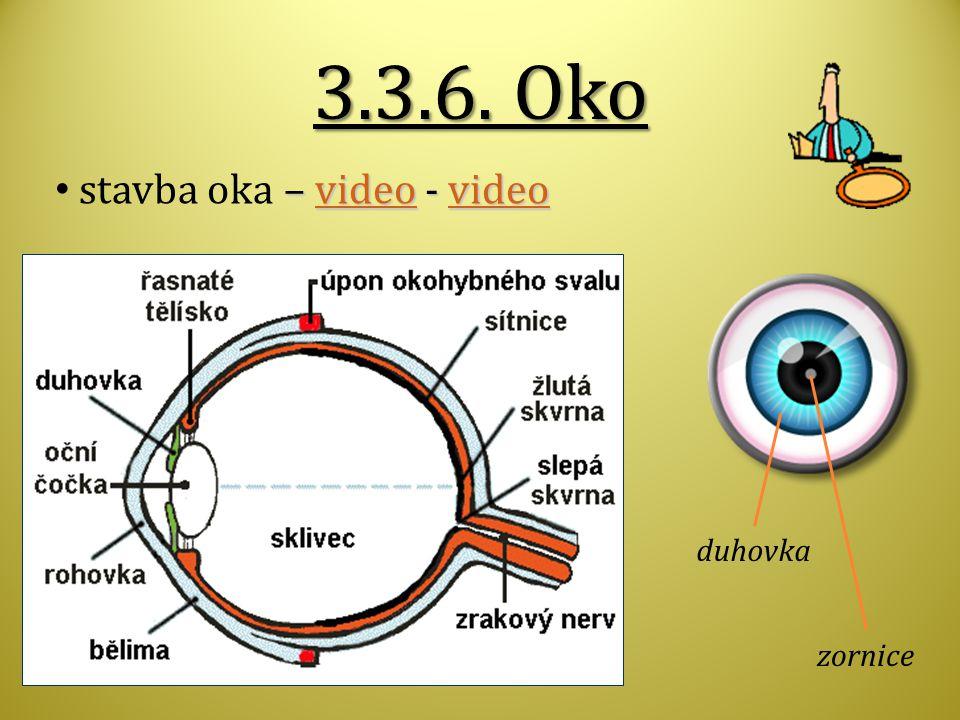 3.3.6. Oko – video - video stavba oka – video - videovideo duhovka zornice