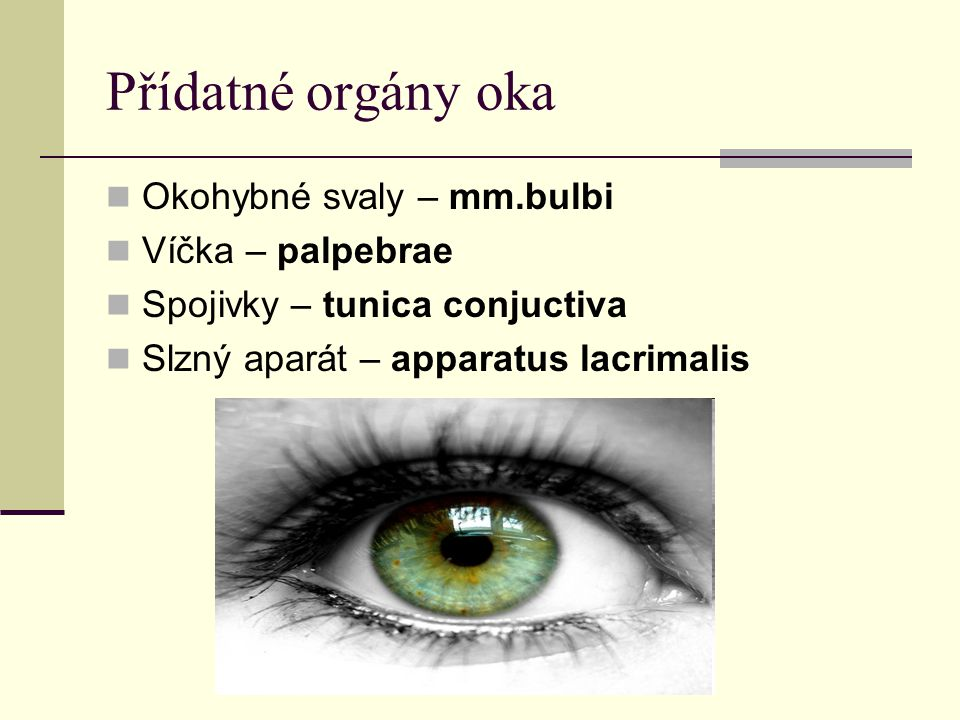 Přídatné orgány oka Okohybné svaly – mm.bulbi Víčka – palpebrae Spojivky – tunica conjuctiva Slzný aparát – apparatus lacrimalis