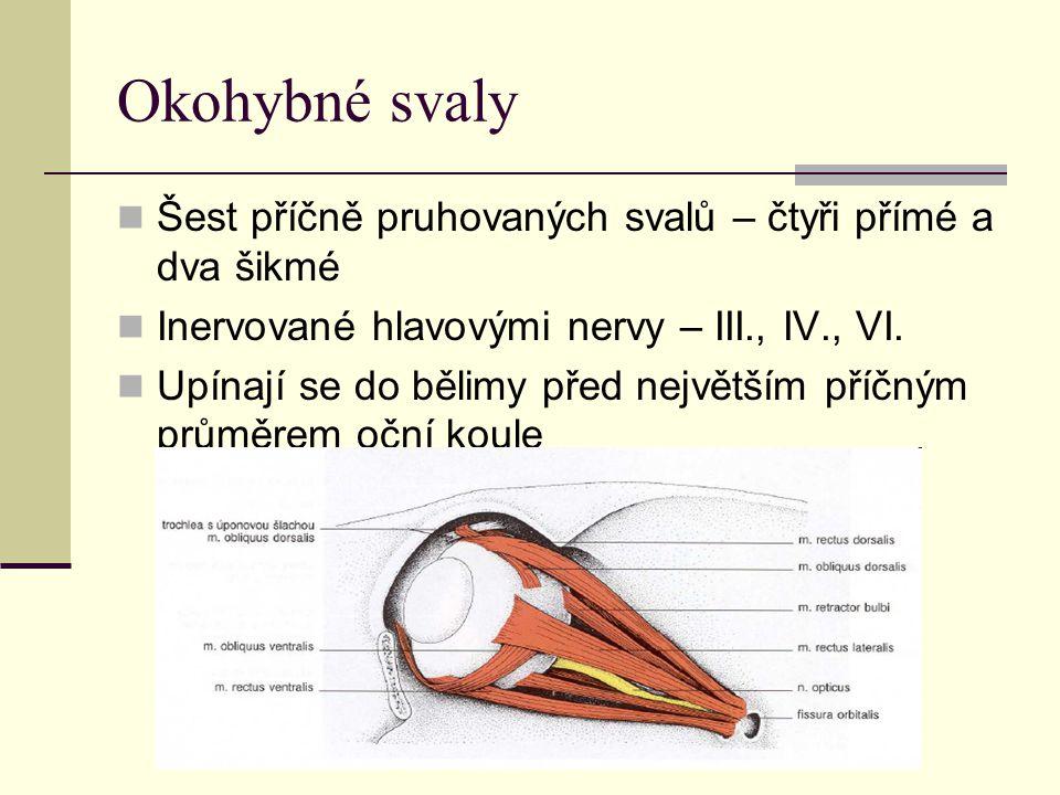 Okohybné svaly Šest příčně pruhovaných svalů – čtyři přímé a dva šikmé Inervované hlavovými nervy – III., IV., VI.