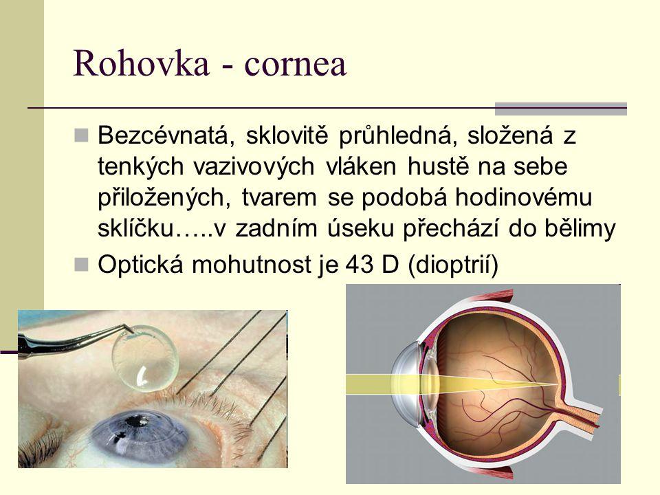 Rohovka - cornea Bezcévnatá, sklovitě průhledná, složená z tenkých vazivových vláken hustě na sebe přiložených, tvarem se podobá hodinovému sklíčku…..v zadním úseku přechází do bělimy Optická mohutnost je 43 D (dioptrií)