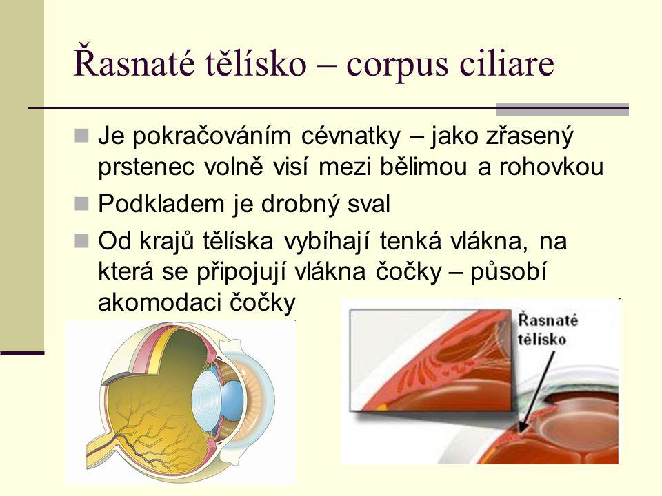 Řasnaté tělísko – corpus ciliare Je pokračováním cévnatky – jako zřasený prstenec volně visí mezi bělimou a rohovkou Podkladem je drobný sval Od krajů tělíska vybíhají tenká vlákna, na která se připojují vlákna čočky – působí akomodaci čočky