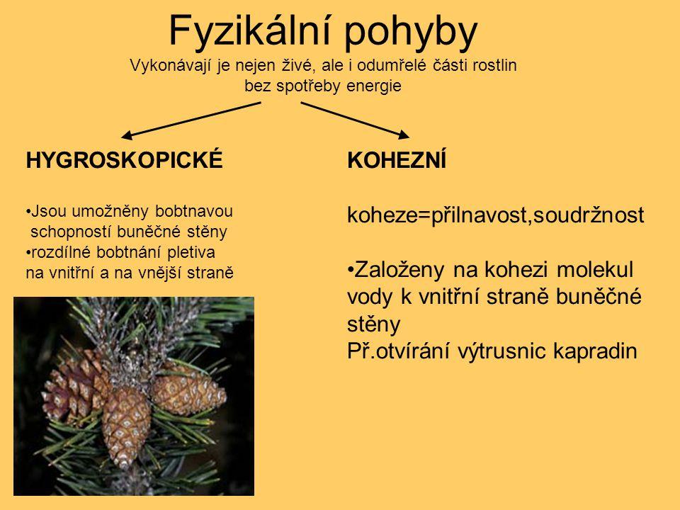 Pohyby rostlin PASIVNÍAKTIVNÍ FYZIKÁLNÍ VITÁLNÍ HYGROSKOPICKÉ KOHEZNÍ LOKOMOČNÍ-TAXE OHYBOVÉ VYVOLANÉ TROPISMY NASTIE SAMOVOLNÉ