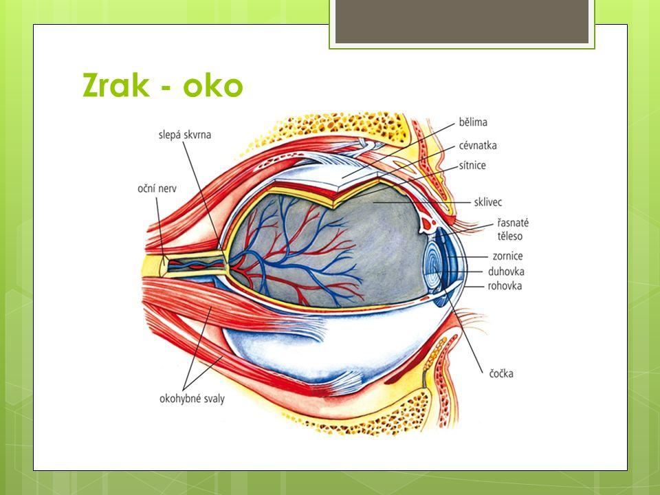Slepá a žlutá skvrna jsou skvrny na sítnici  Slepá skvrna je místo, kde vystupuje zrakový nerv z oční koule, nejsou zde světločivné buňky a paprsek, který sem dopadá nevyvolá žádné podráždění.