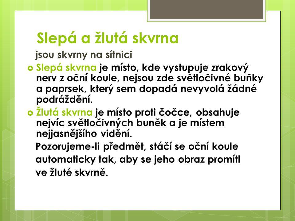Slepá a žlutá skvrna vidíme nevidíme slepá skvrna žlutá skvrna http://www.gsos.cz/man/biola/pk.Z-PL18-3-ZrakII.pdf