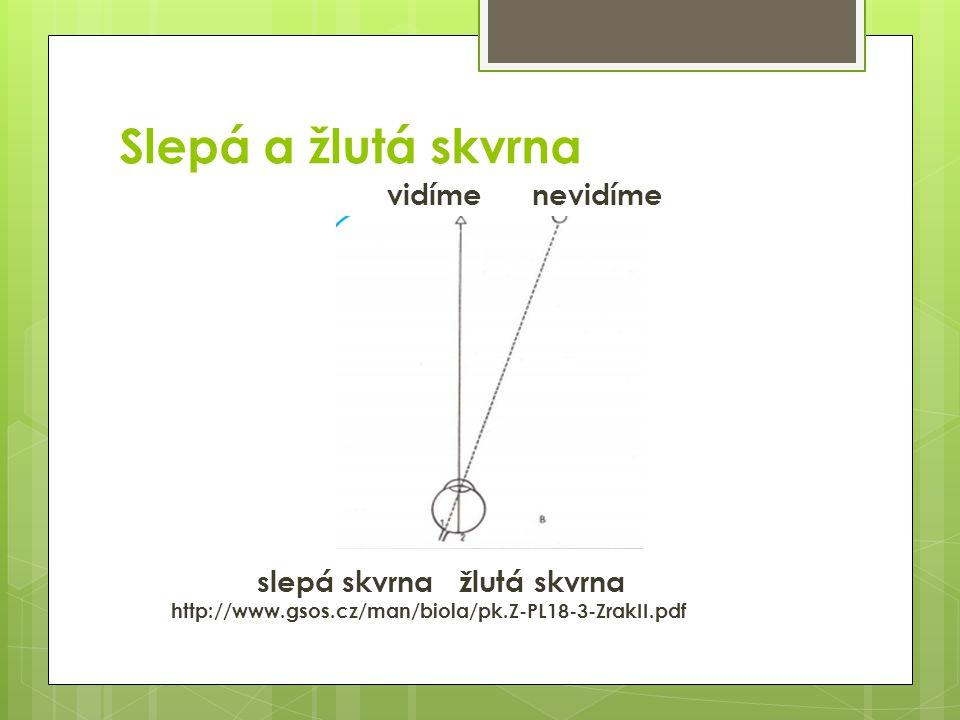 Zornicový reflex  Duhovka reguluje množství světla pronikajícího zornicí do oka http://www.3dstudio.cz/files/clanky/33_image015.jpg