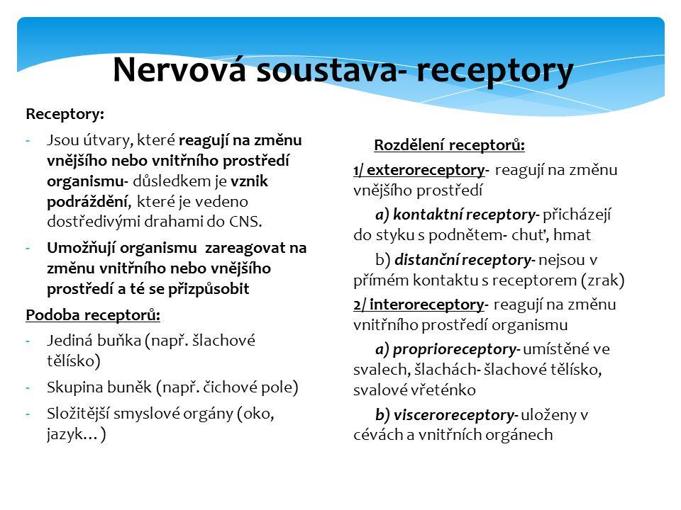 1/ Mechanoreceptory- zaznamenávají tlak, tah, pohyb- hmatová tělíska v kůži, sluchový receptor, rovnovážný receptor ve vnitřním uchu 2/ Chemoreceptory- reagují na chemické podněty- čichový receptor, čidla obsahu glukózy, CO2 v krvi 3/ Fotoreceptory- reagují na světelný podnět 4/ Termoreceptory- reagují na tepelné podněty- nervová zakončení v kůži nebo v mozku 5/ Nocireceptory- umožňují vnímání bolesti.