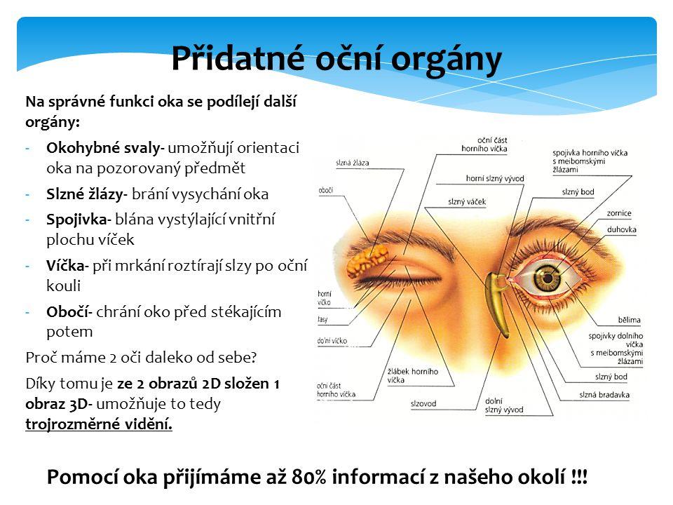 Na správné funkci oka se podílejí další orgány: -Okohybné svaly- umožňují orientaci oka na pozorovaný předmět -Slzné žlázy- brání vysychání oka -Spoji