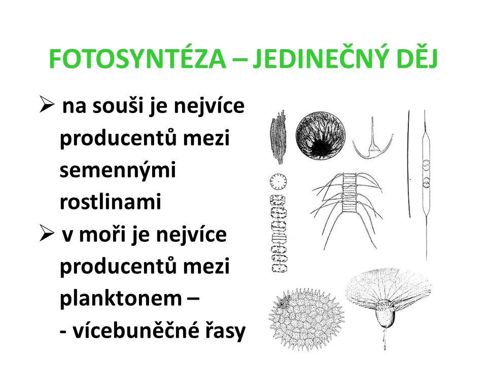 FOTOSYNTÉZA – JEDINEČNÝ DĚJ  na souši je nejvíce producentů mezi semennými rostlinami  v moři je nejvíce producentů mezi planktonem – - vícebuněčné řasy