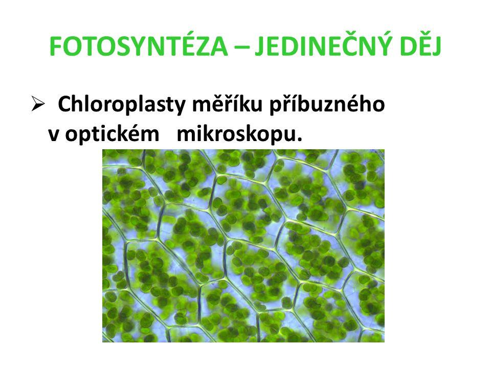 FOTOSYNTÉZA – JEDINEČNÝ DĚJ  Chloroplasty měříku příbuzného v optickém mikroskopu.