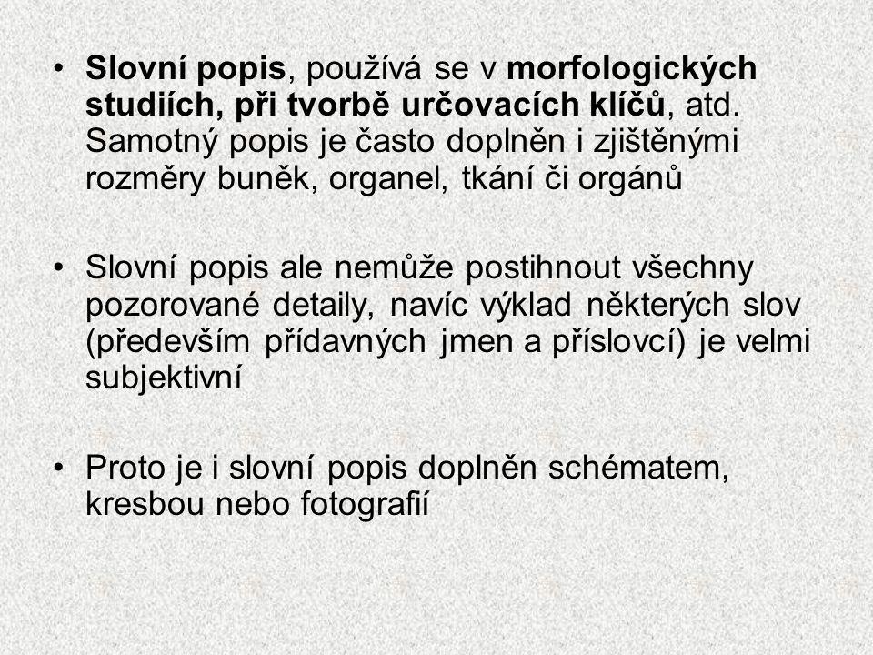 Slovní popis, používá se v morfologických studiích, při tvorbě určovacích klíčů, atd. Samotný popis je často doplněn i zjištěnými rozměry buněk, organ