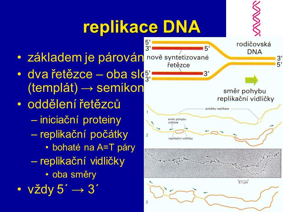 replikace DNA základem je párování bazí dva řetězce – oba slouží jako předloha (templát) → semikonzervativní oddělení řetězců –iniciační proteiny –replikační počátky bohaté na A=T páry –replikační vidličky oba směry vždy 5´ → 3´