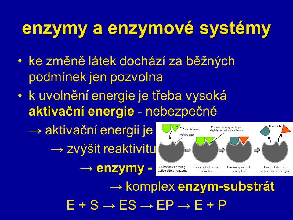 enzymy a enzymové systémy ke změně látek dochází za běžných podmínek jen pozvolna aktivační energiek uvolnění energie je třeba vysoká aktivační energie - nebezpečné → aktivační energii je třeba snížit → zvýšit reaktivitu substrátu enzymy - katalyzátory → enzymy - katalyzátory enzym-substrát → komplex enzym-substrát E + S → ES → EP → E + P