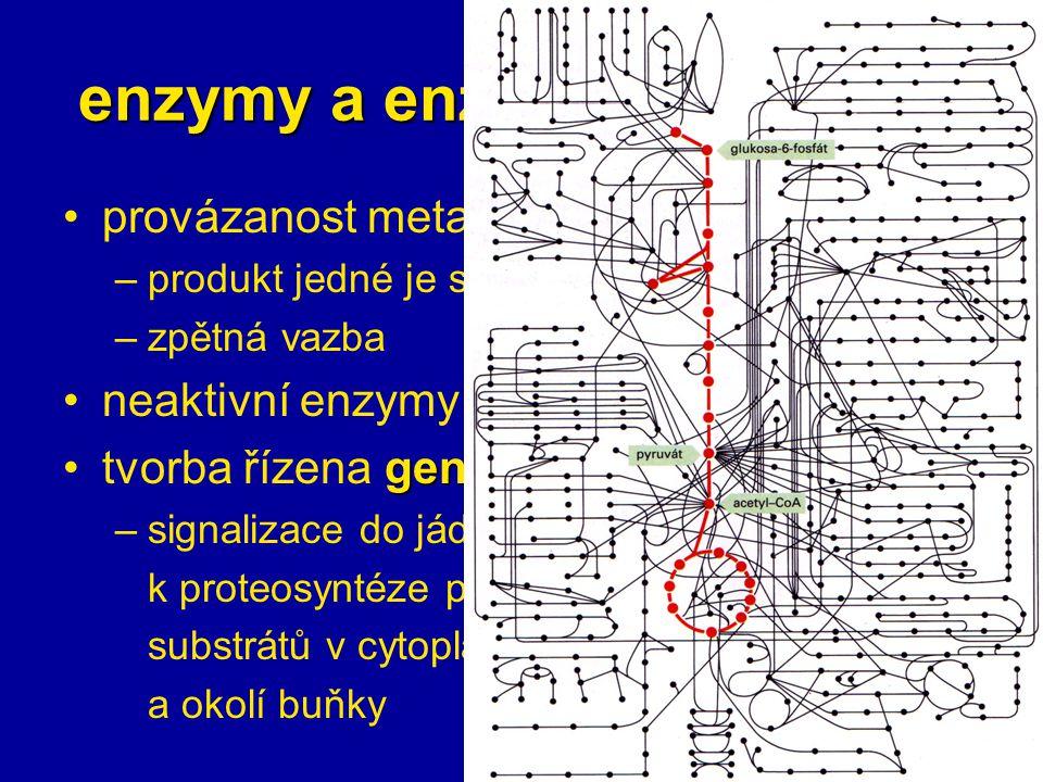 enzymy a enzymové systémy provázanost metabolických drah –produkt jedné je substrátem druhé –zpětná vazba zymogenyneaktivní enzymy = zymogeny genetickytvorba řízena geneticky –signalizace do jádra k proteosyntéze podle substrátů v cytoplazmě a okolí buňky