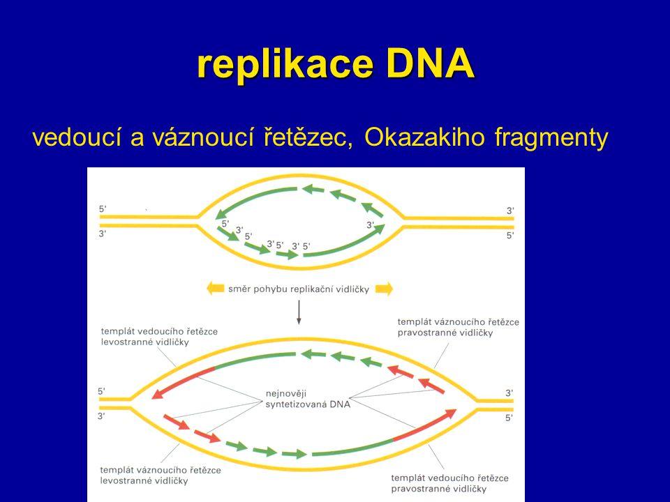 vedoucí a váznoucí řetězec, Okazakiho fragmenty