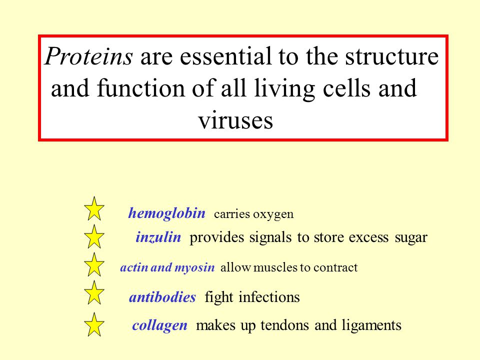 Proteins are essential to the structure and function of all living cells and viruses hemoglobin carries oxygen inzulin provides signals to store exces