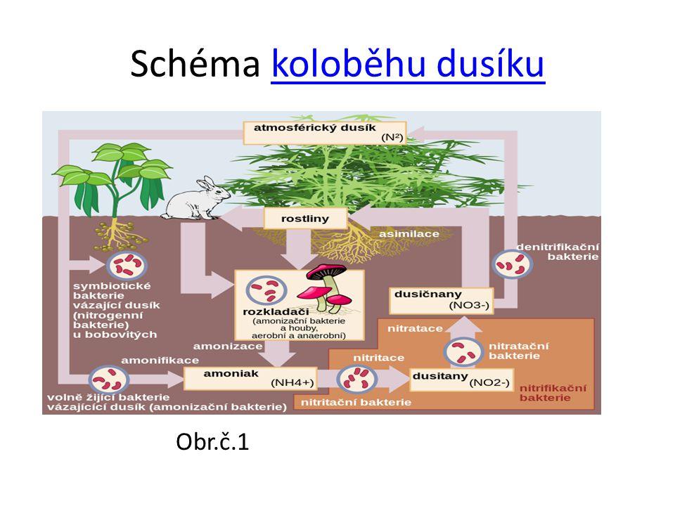 Schéma koloběhu dusíkukoloběhu dusíku Obr.č.1