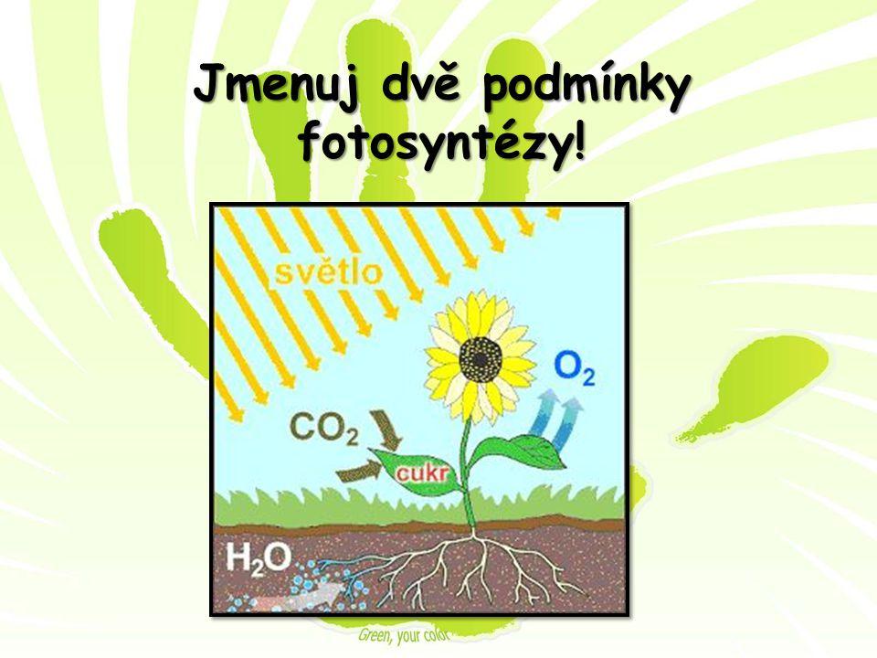 Jmenuj dvě podmínky fotosyntézy!
