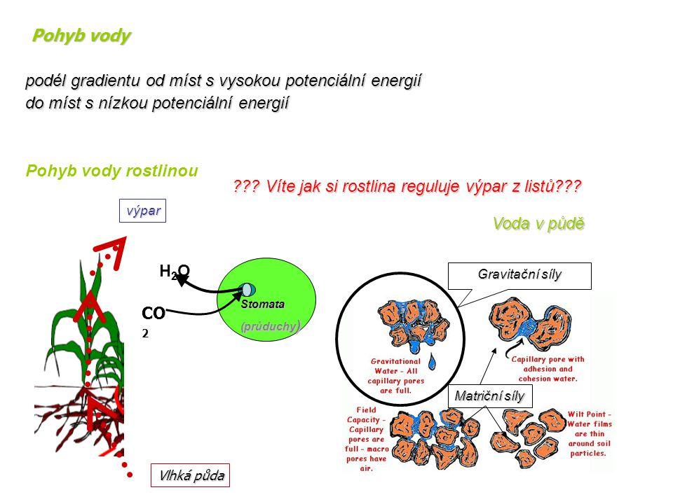 H2OH2O CO 2 Stomata (průduchy ) Vlhká půda výpar Pohyb vody rostlinou ??? Víte jak si rostlina reguluje výpar z listů??? Voda v půdě Matriční síly Gra